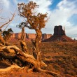 Juniper in Monument Valley — Stock Photo