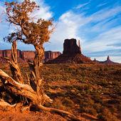 Juniper in Monument Valley — Stock Photo