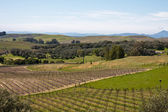 Napa Valley Fields — Stock Photo