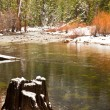 Tree Stump in the Merced River — Stock Photo