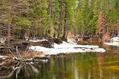 Yosemite Forest — Stock Photo
