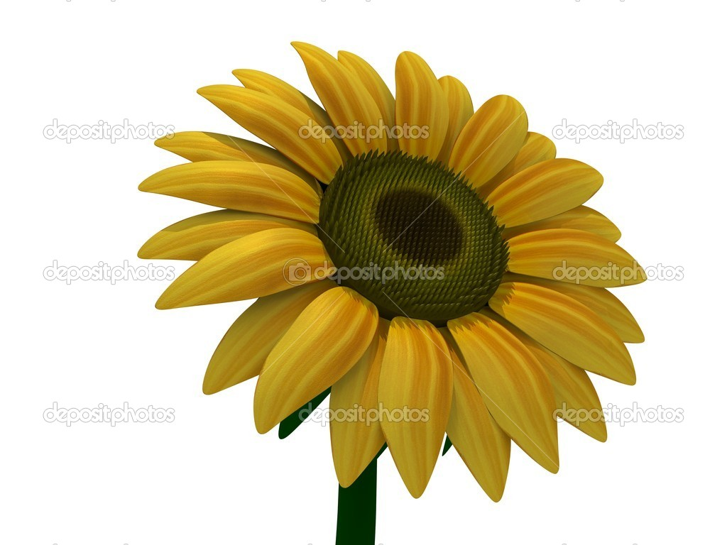 A isolated 3D sunflower — Stock Photo #2013469