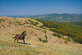 Horse running on a hill — Stock Photo
