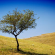 Little tree on a hill - Stock Photo