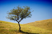 Little tree on a hill — Stock Photo