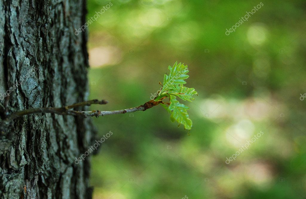 Wood branch with blured background — Stock Photo #2343695
