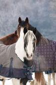 Winter horses — Stock Photo