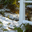 Snowy woodland — Stockfoto