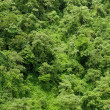 Rainforest — Stock Photo #2185263