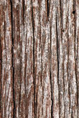 Tarnished wood — Stock Photo