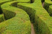 Maze hedges — Stock Photo