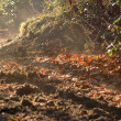 Stock Photo: Sunlit woodland