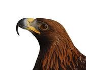 Eagle head isolated — Stock Photo