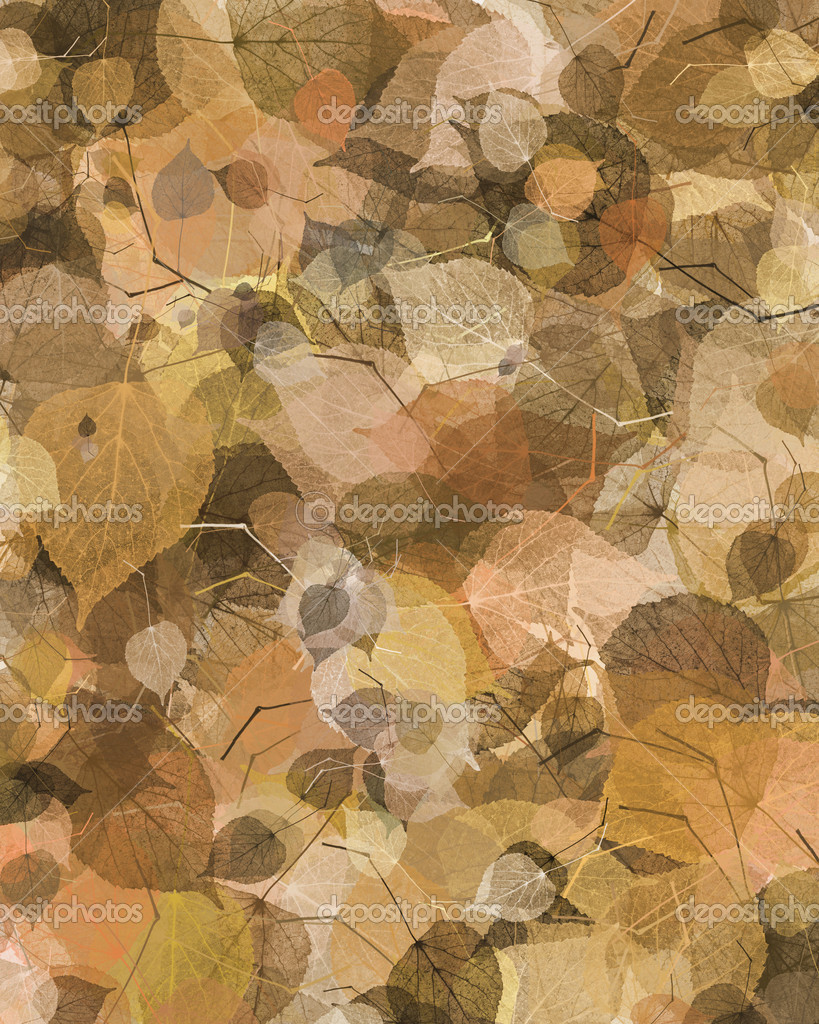 Autumn leaf background  — Stock Photo #2059022
