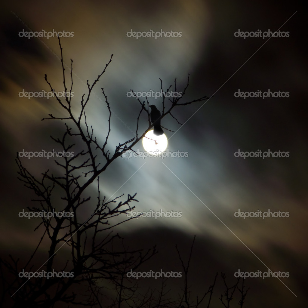 Raven siting on the branch and fullmoon night  Stock Photo #2105912