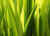 Fundo de folhas verdes — Fotografia Stock