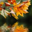 Stockfoto: Autumn leaves