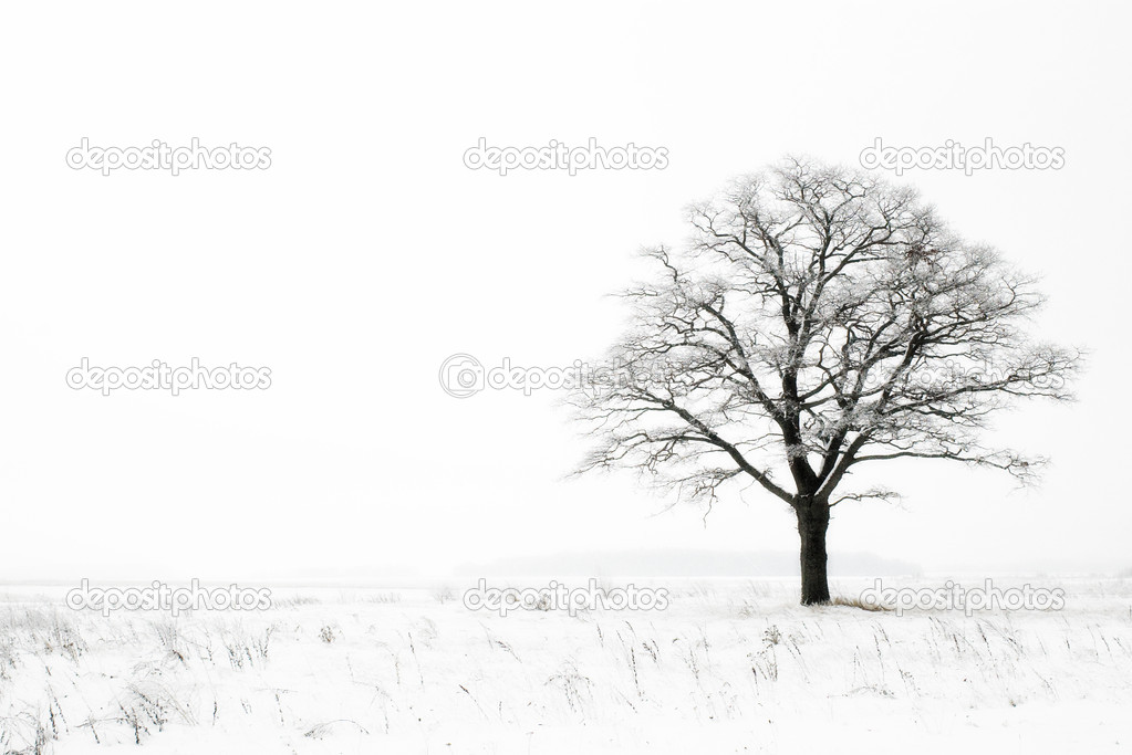 Oak in winter field on snowy and foggy day — Foto Stock #1942370