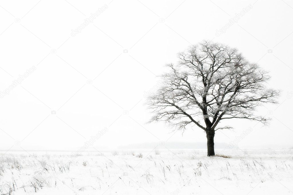 Oak in winter field on snowy and foggy day — Stok fotoğraf #1942370