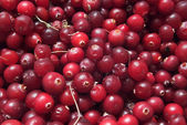 Cranberry texture — Stock Photo