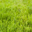 Freshly mowed lawn — Stock Photo #2167165