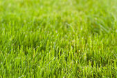 Freshly mowed lawn — Stock Photo
