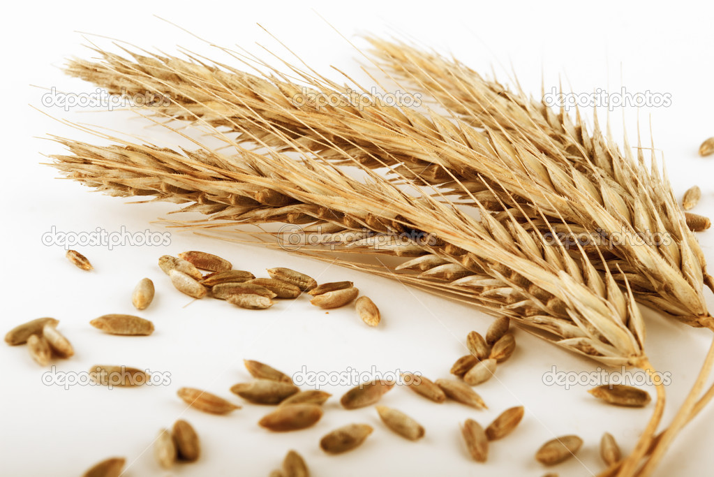 Ripe rye ears and  seeds  on white background — Stock Photo #2167370