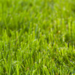 Royalty-Free Stock Photo: Vertical lawn texture