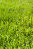 Vertical lawn texture — Stock Photo