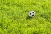 Toy ball on the grass — Stock Photo