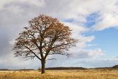 Autumnal oak — Stock Photo