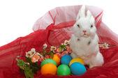 Cute little rabbit — Stock Photo