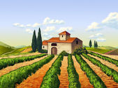 Italian vineyard — Stock Photo