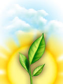 Leaves and sun — Stock Photo