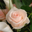 Wedding rose — Stock Photo #2016724