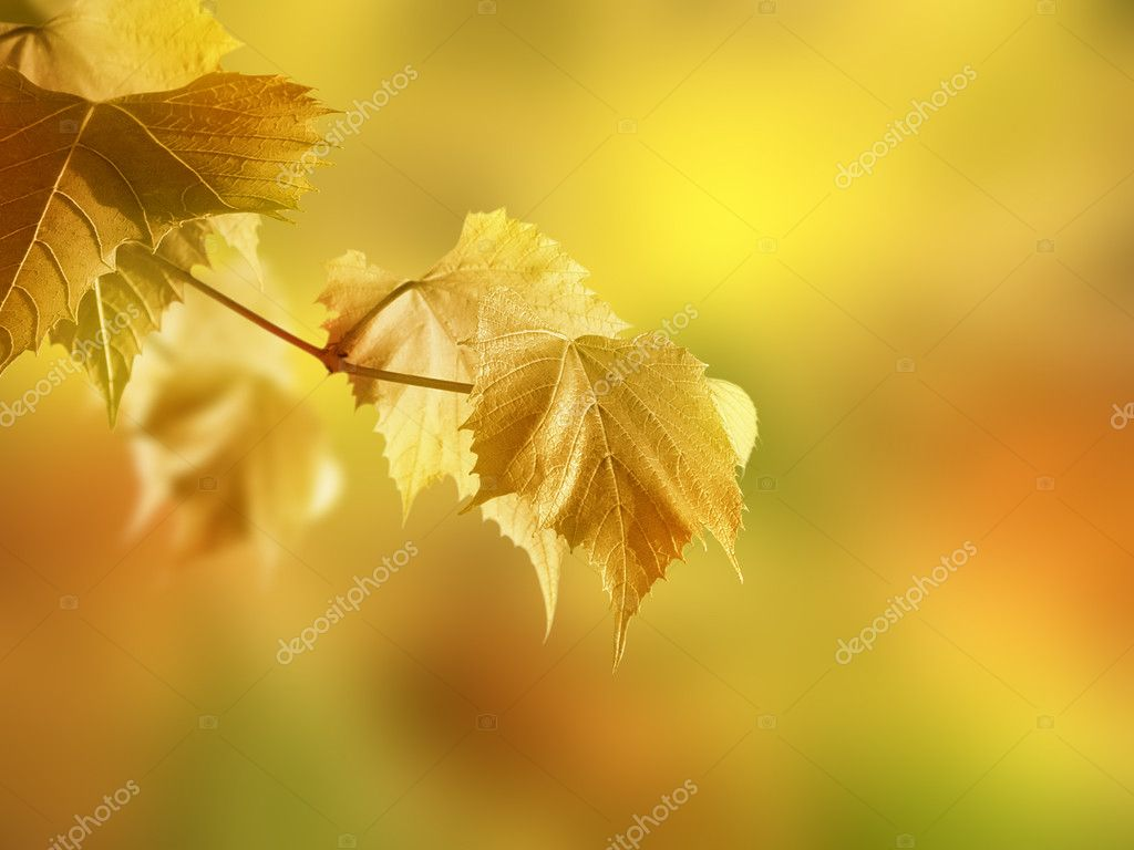 Autumn branch on a colored background.  Stock Photo #1944192