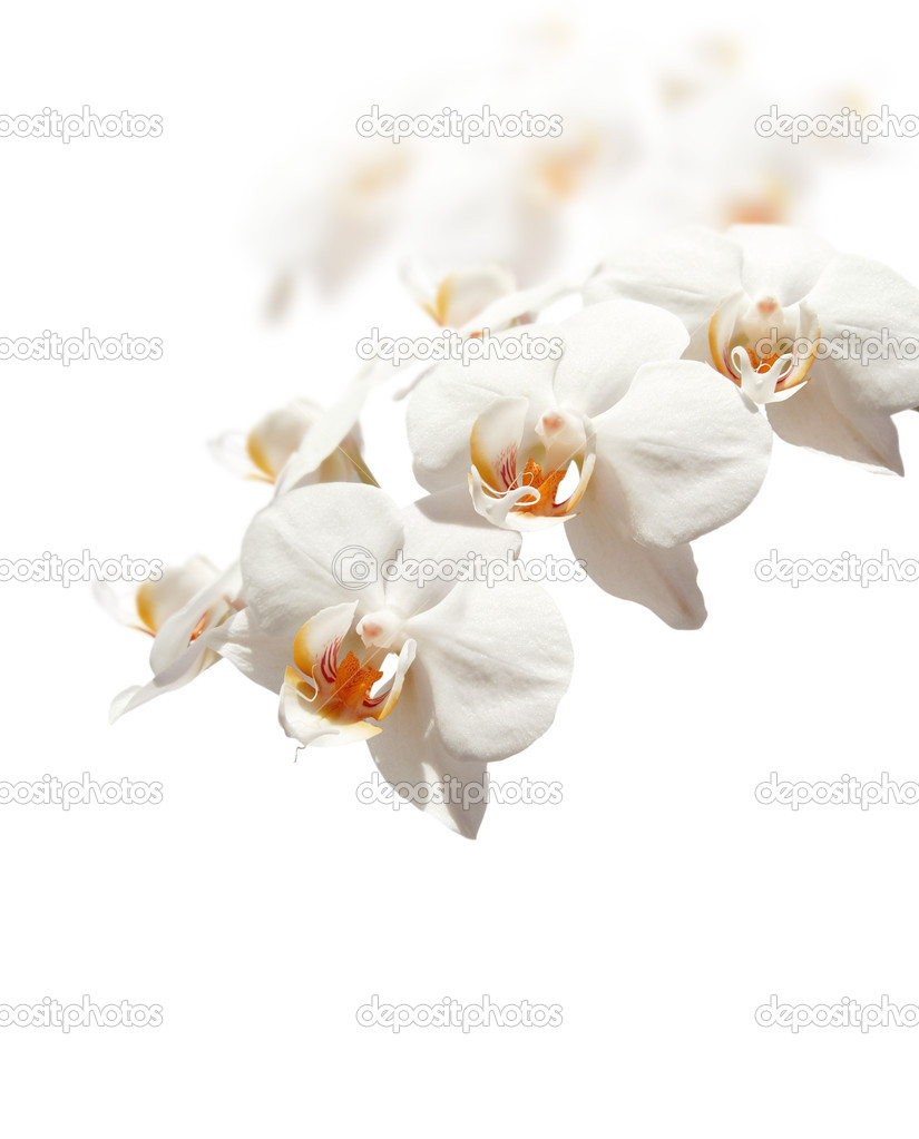 White orchid on white background. — Stock Photo #2240460