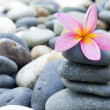 Frangipani with stack of rocks — Stock Photo