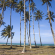 Stock Photo: Blue beach with coconut
