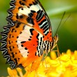 Butterfly — Stock Photo #2520631