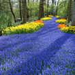 Lane of colorful spring flowers — Foto Stock