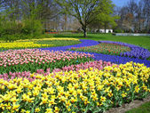 Field of colorful spring flowers — Stock Photo