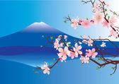 Japan fuji sakura — Stockfoto