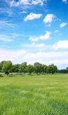 Summer field — Stock Photo