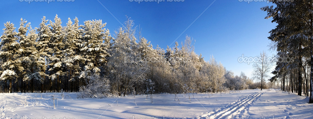 Panoramic view of the winter forest in a sunny day  Stock Photo #2006855