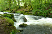 Fast flowing stream — Stock Photo