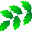 Green branch — Stock Vector #2080638