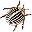 Stock Vector: Colorado potato beetle