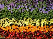 Blomma bakgrund — Stockfoto