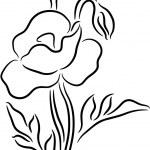 Poppy Flower contour — Stock Vector